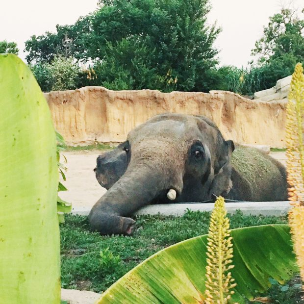 Do At The Zoo Recap   cakenknife.com