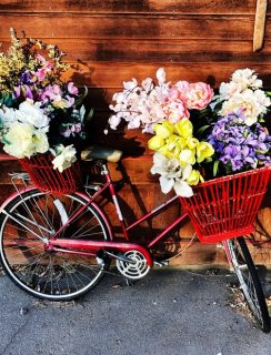 Spring flowers in a bicycle