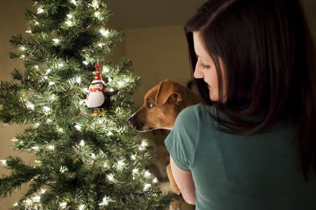 Christmas tree with my dog