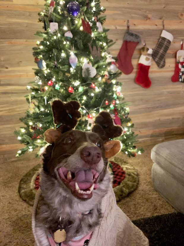 Otis the Dog in front of a Christmas Tree
