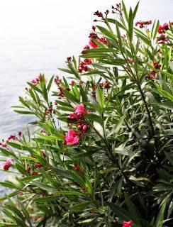 Gardens overlooking Lake Como