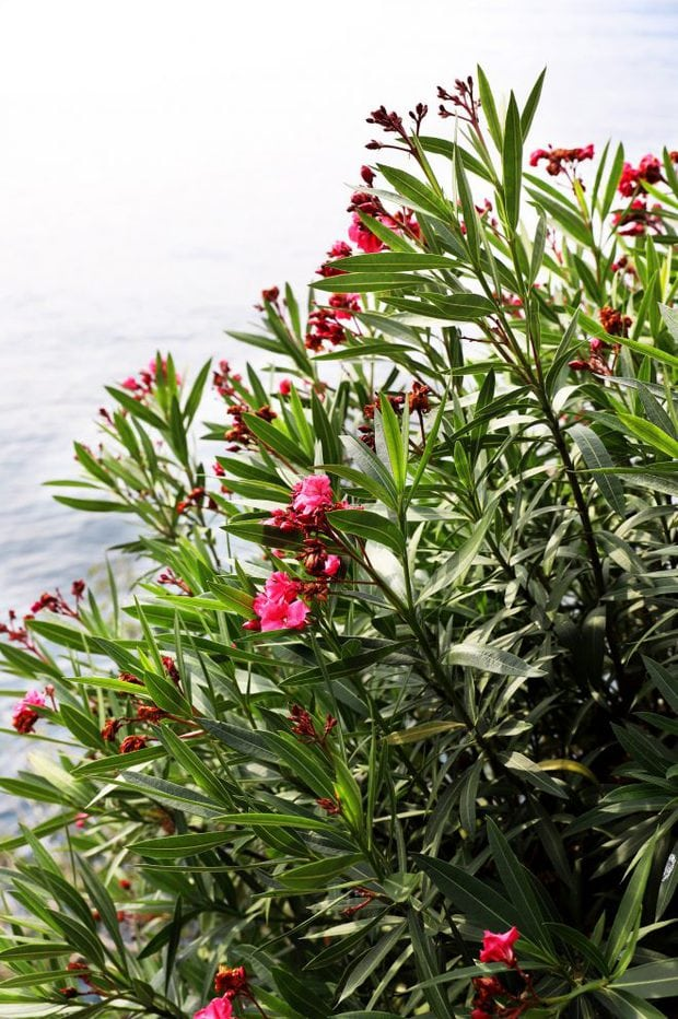 Gardens overlooking Lake Como self care