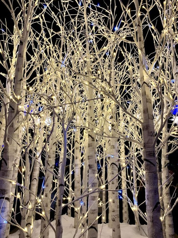 Holiday lights in aspen trees for Weekly Slice for the holidays