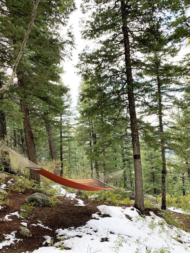 Hammock among pine trees picture