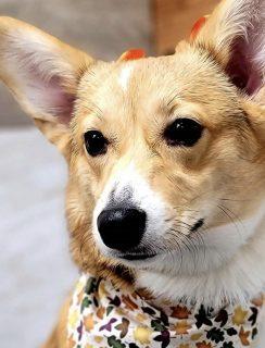 Mochi puppy pic