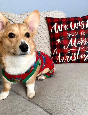Mochi christmas photo