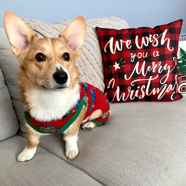 Mochi's first christmas photo